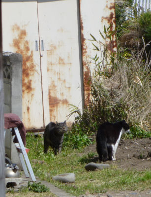 外猫の争い5