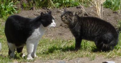 外猫の争い4