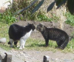 外猫の争い2