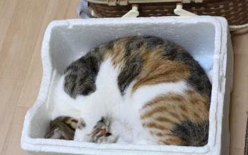 みかんちゃんの箱