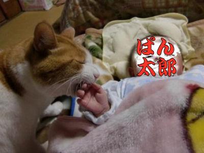 赤子を喰らう猫