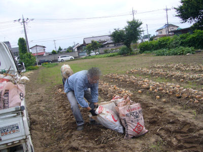 本日の農作業