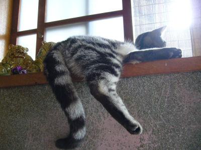 足ブラ猫3
