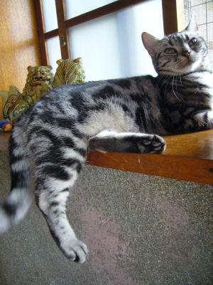 足ブラ猫2