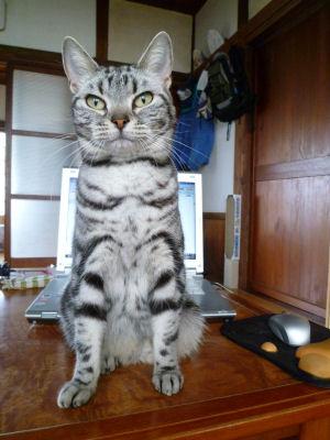 のたうつ猫5