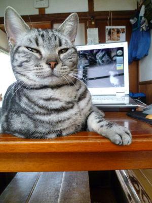 のたうつ猫6