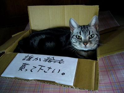 箱入りネコ?2