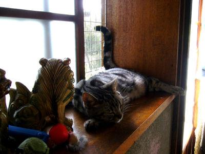 猫も涼む?2
