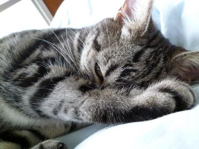やっぱり起きてる。