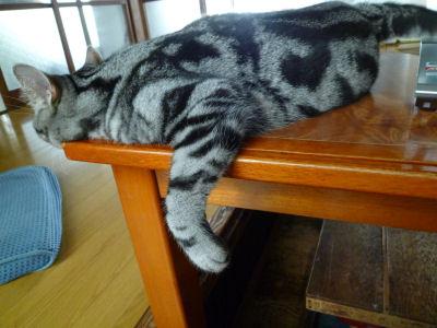 へばりつく猫