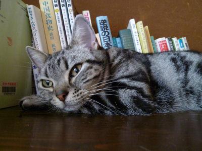 まったりな猫。