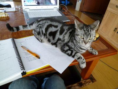 ジャマする猫1
