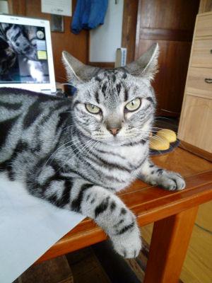 ジャマする猫2