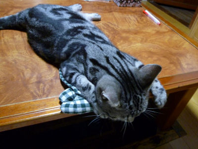 特別待遇な猫3