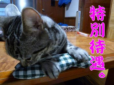 特別待遇な猫1