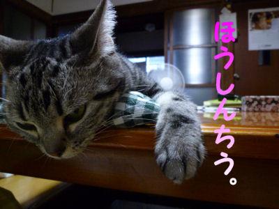 特別待遇な猫2