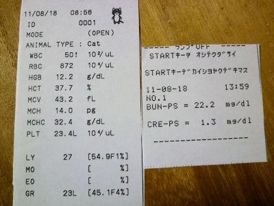 8月18日血液検査結果