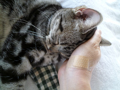 慰める猫2