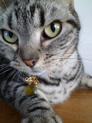 ねえちゃんのネックレス1