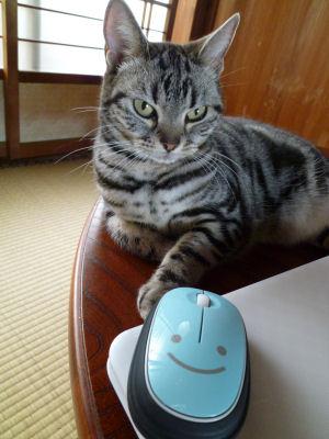 おにゅうマウス。