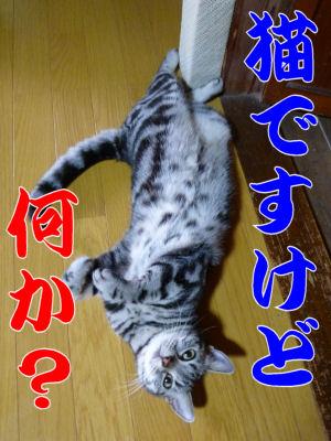 猫ですけど。
