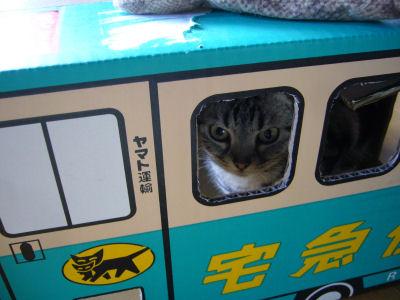 飼い主の心猫知らず1