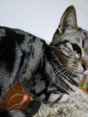 温める猫2