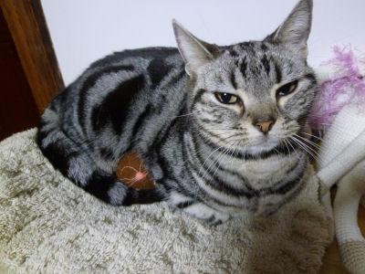 温める猫1