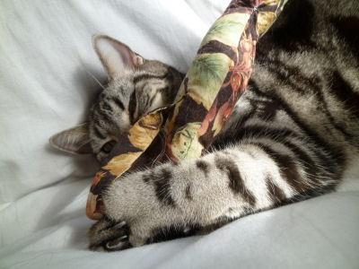 勤勉な猫?