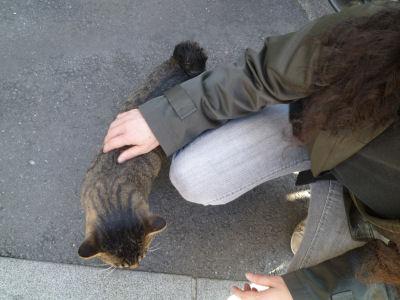 菓子屋横丁の猫2