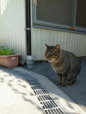 菓子屋横丁の猫1
