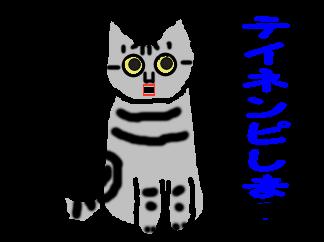 テイネンピ猫