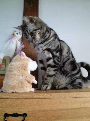 ネコとネズミ?
