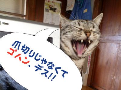 起こす猫6