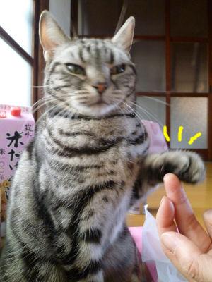 起こす猫2