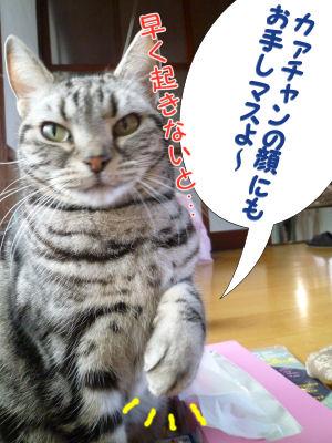 起こす猫3