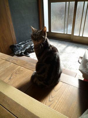 我が家の日向ぼっこ猫