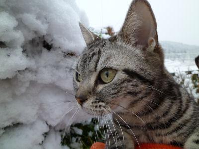 雪、覚えてる?2