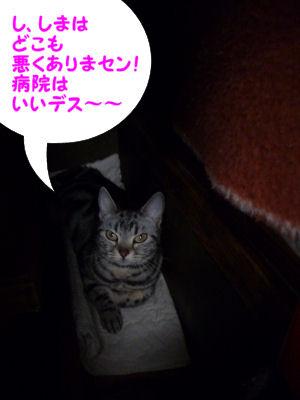 コタツの猫
