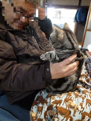 抱かれる猫1