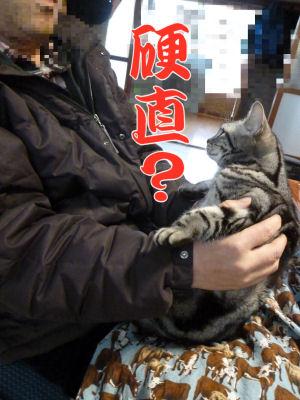 抱かれる猫2