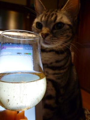 ひなまつりに乾杯?
