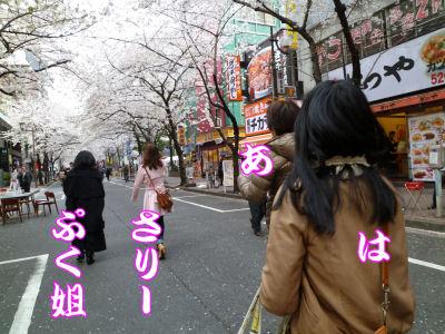 桜の花の満開の下1
