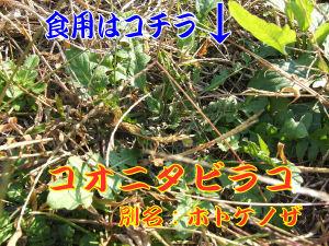 tabirako-R.jpg