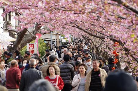 2011kawazu3.jpg