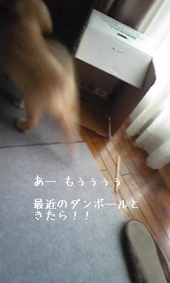 画像 423