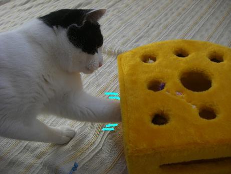 チェダーチーズ4