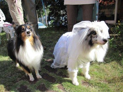 カミリ君(左)&アキリ君(右) 自分も女装させられちゃうのでは?とドン引きするカミリ君の図