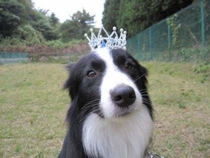 王冠でつか?