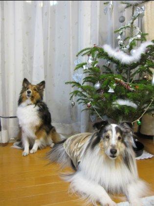 次はクリスマスに来るでつよ♪